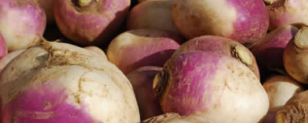May We Never Have A Love For or Want of Turnips