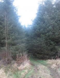 Edenmore   Wood_Ballinamuck_Longford_Ireland