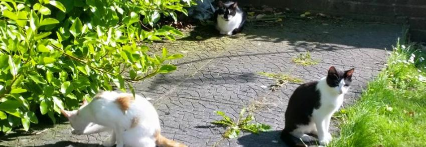 Our Housemates in Renmore... the stray cats!
